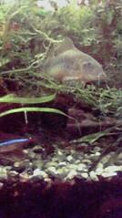 一石二鳥 公式ブログ/熱帯魚は涼しげです 画像2