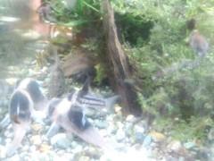 一石二鳥 公式ブログ/熱帯魚眺め過ぎね 画像3
