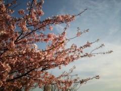 野田萌 公式ブログ/春だ。 画像1