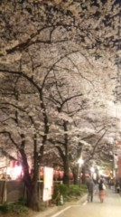 大森美知 公式ブログ/目黒川癒し満開 画像3