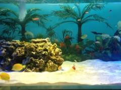 大森美知 公式ブログ/love水族館 画像1