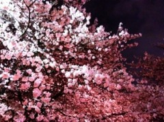 大森美知 公式ブログ/桜ひらひら〜♪ 画像2
