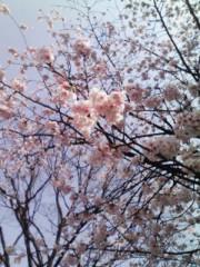 江波戸邦昌(オテンキ) 公式ブログ/〜サクラサクの話〜 画像1