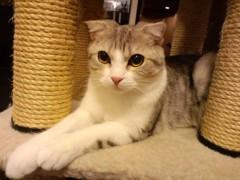 織田まな 公式ブログ/猫カフェ♪ 画像1