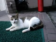 織田まな 公式ブログ/島猫 画像1