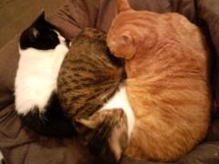 織田まな 公式ブログ/猫ぎっしり 画像1