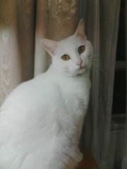 織田まな 公式ブログ/動物救護!!! 画像1