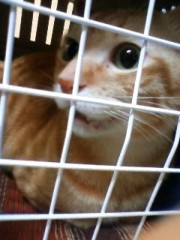 織田まな 公式ブログ/動物病院 画像1