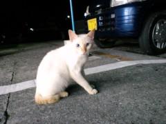 織田まな 公式ブログ/島猫 画像2