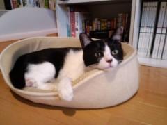織田まな 公式ブログ/猫ベッド 画像1