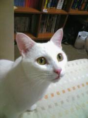 織田まな 公式ブログ/おやすみなさぃ☆ 画像1