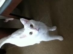 織田まな 公式ブログ/た・たいへんにゃり☆ 画像1