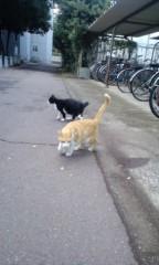 織田まな 公式ブログ/地域猫達♪ 画像1