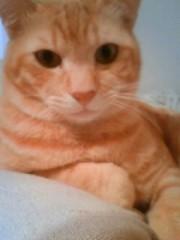 織田まな 公式ブログ/オレンジ猫よりおはにゃん☆ 画像1
