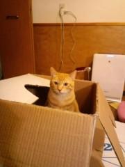 織田まな 公式ブログ/捨て猫?! 画像1