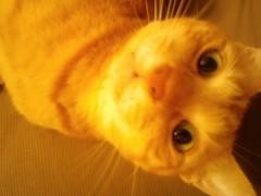織田まな 公式ブログ/猫の肝試し 画像1