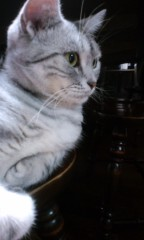 織田まな 公式ブログ/実家猫 画像1