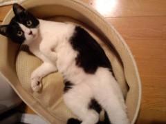 織田まな 公式ブログ/暑いと猫は…� 画像1