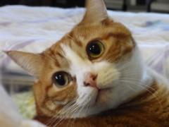 式部太郎 公式ブログ/親ばか日記 ☆ いくらちゃ〜ん ☆ 画像1