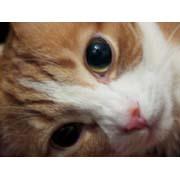 式部太郎 公式ブログ/お神輿こわい・・♪にゃんにゃん♪ 画像2