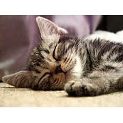 式部太郎 公式ブログ/おやすみなさい・・♪にゃんにゃん♪ 画像1