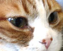 式部太郎 公式ブログ/早めに投票・・♪にゃんにゃん♪ 画像2