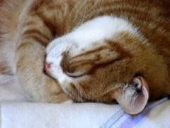 式部太郎 公式ブログ/超ラブリー!天使の寝顔・・ 画像1