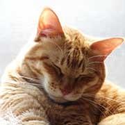 式部太郎 公式ブログ/おやすみなさい。そして、おはようございます・・♪にゃんにゃん♪ 画像2