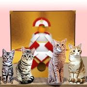 式部太郎 公式ブログ/謹賀新年 ♪にゃんにゃん♪ 画像1