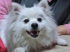 円en 公式ブログ/実家のバカ犬-犬バカ 画像1