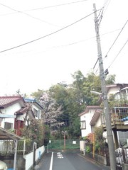 神條零柩 公式ブログ/春ノ嵐ト身体ト精神ノ破壊 画像1
