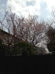神條零柩 公式ブログ/桜 画像1