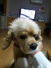 神條零柩 公式ブログ/愛犬ばじる 画像2