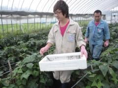 なお(だいなお) 公式ブログ/収穫のお手伝い。in秋田県にかほ市 画像1