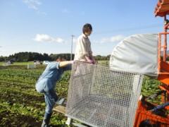 なお(だいなお) 公式ブログ/ほうれんそう収穫。in宮崎県児湯郡 画像2