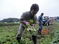 なお(だいなお) 公式ブログ/こかぶ収穫&あぐりハウスすずな。in青森県野辺地町 画像1