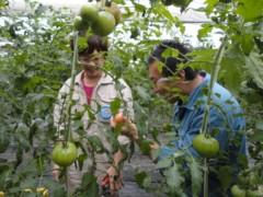 なお(だいなお) 公式ブログ/トマト収穫。in那須塩原 画像1