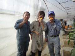 なお(だいなお) 公式ブログ/カラーピーマン収穫。in宮崎県西都市 画像2