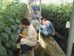 なお(だいなお) 公式ブログ/カラーピーマン収穫。in宮崎県西都市 画像1