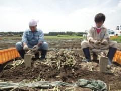 なお(だいなお) 公式ブログ/にんにく収穫。in青森県上北郡七戸町 画像2