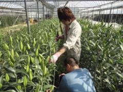 なお(だいなお) 公式ブログ/収穫、お手伝い。in徳島市 画像1