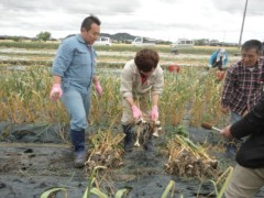 なお(だいなお) 公式ブログ/にんにく収穫。in香川県琴平 画像1