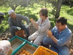 なお(だいなお) 公式ブログ/おけさ柿収穫。in新潟県佐渡市新穂長畝 画像1