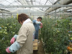 なお(だいなお) 公式ブログ/シュガートマト。in高知県高岡郡日高 画像1