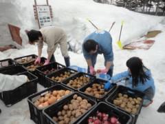 なお(だいなお) 公式ブログ/雪中野菜収穫。in北海道北広島市 画像1