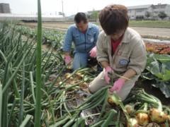なお(だいなお) 公式ブログ/収穫、お手伝い。in徳島市 画像3