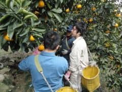なお(だいなお) 公式ブログ/はっさく収穫。in村上家はっさく畑 画像1
