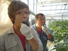 なお(だいなお) 公式ブログ/水なす収穫。in大阪府岸和田市 画像1