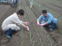 なお(だいなお) 公式ブログ/たまねぎ苗の定植作業お手伝い。in富山県砺波市内 画像1