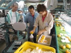 なお(だいなお) 公式ブログ/柿の収穫&選果場。in奈良県五条市 画像2